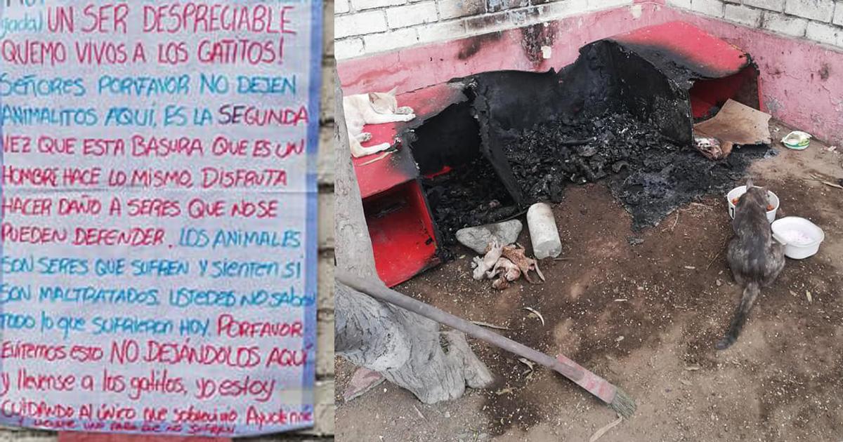 Cat Burned Alive – Wonderful Image Gallery