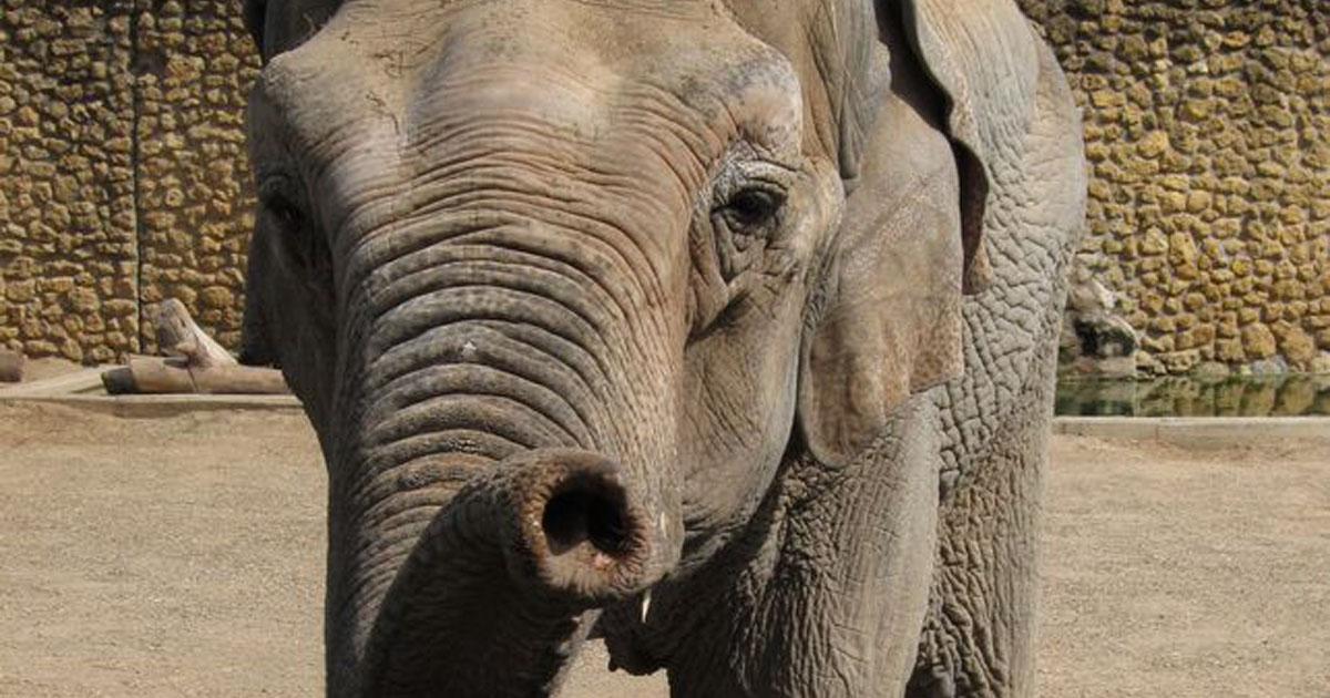 Murió la elefanta mas triste del mundo, cierren el Zoo de Córdoba!