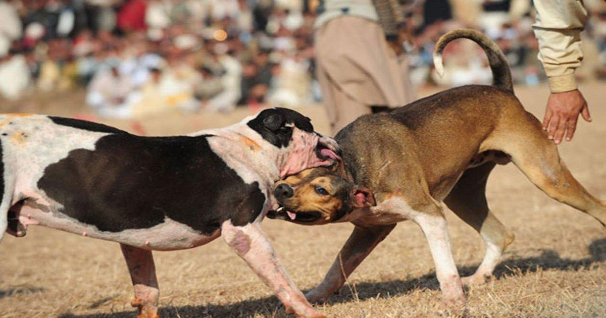 We did it! The Senate banned dog fights throughout Mexico!