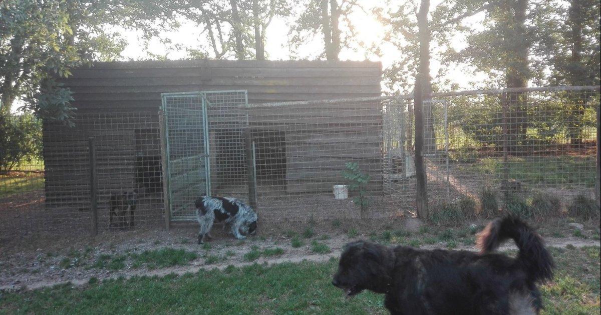 Pour le maintien des abris chiens au Refuge de Dinant