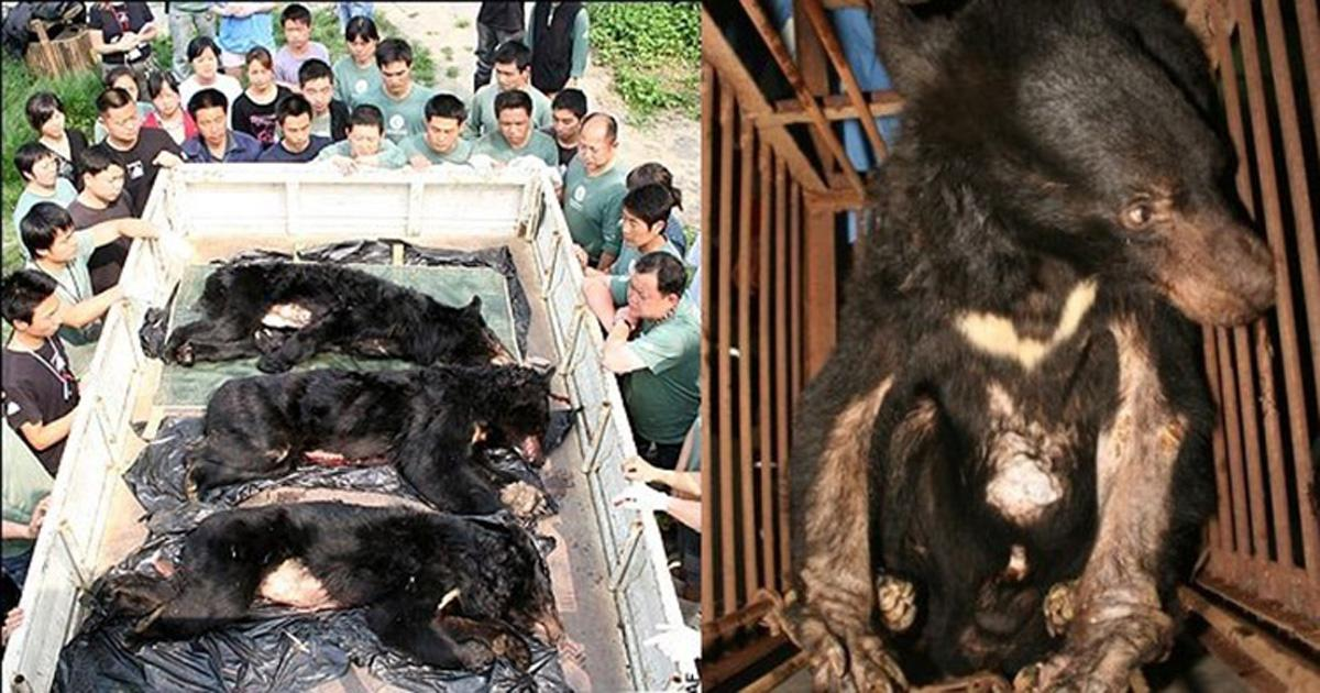 Prohibit bear bile farms