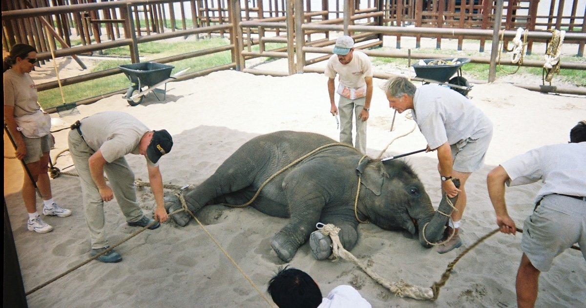 The Madrid City Council prohibits circuses with wild animals!