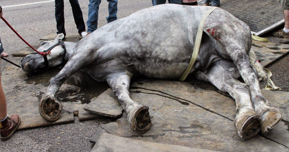 We have managed to stop the exploitation and mistreatment of many horses in Santiago de Compostela