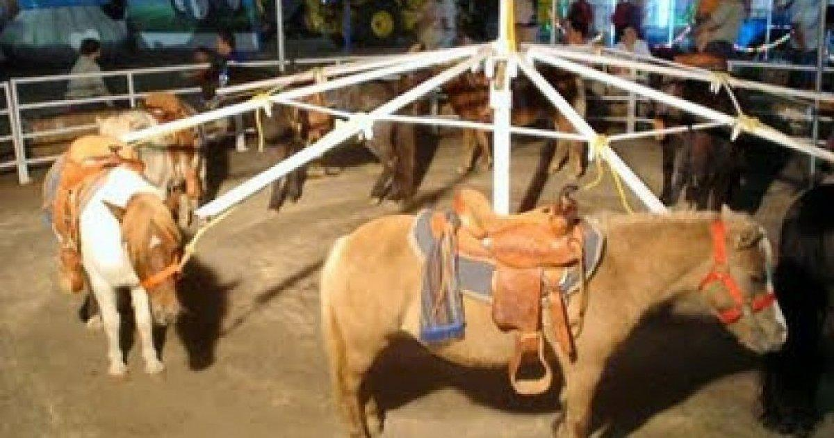 Valencia prohibit to license circuses with wild animals and fairs that use animals