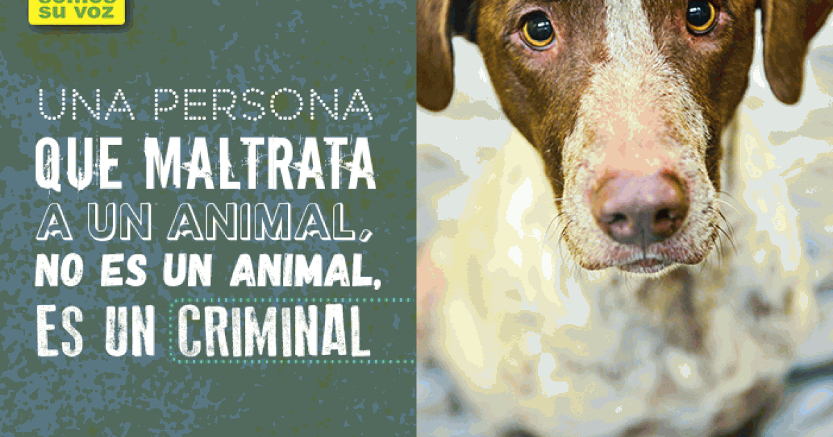 The Congress of Nuevo Leon typifies animal abuse as a crime!