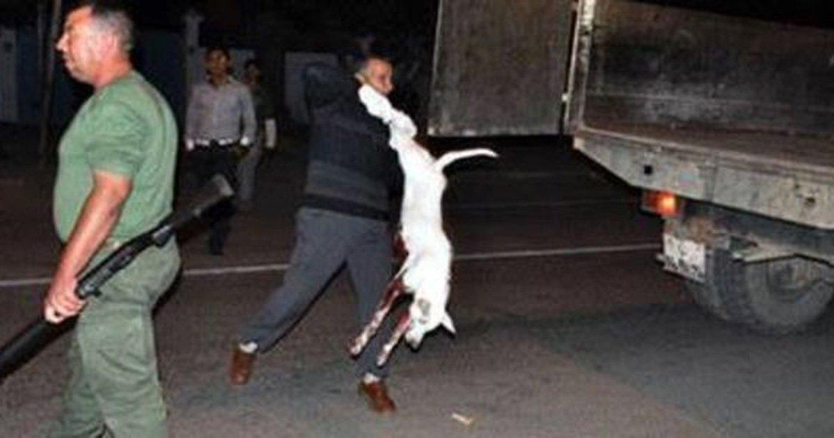 Sauvez les chiens du Maroc