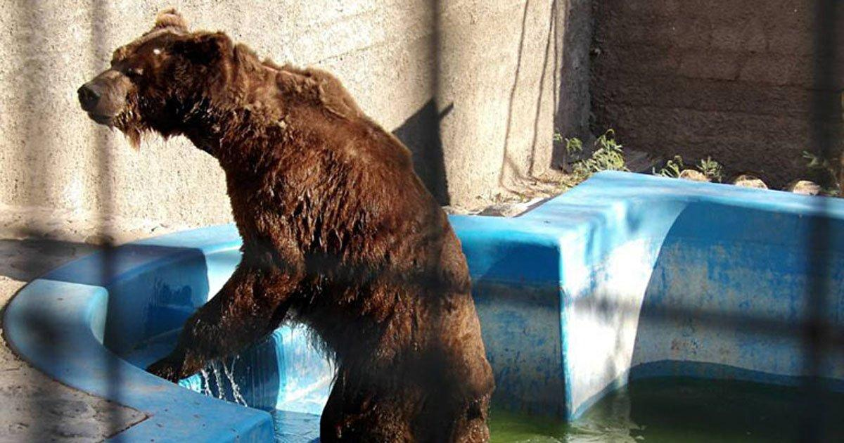 Buenos Aires Zoo will be transformed into an Ecopark!