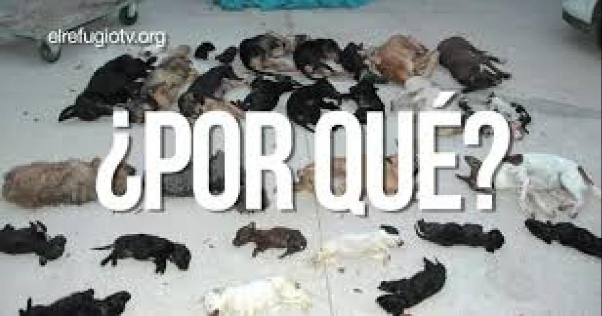 They condemned to 3 years and 9 months of prison to the murderer of more than 2000 dogs and cats!