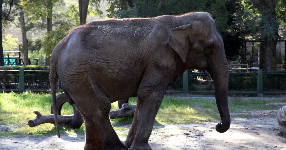 They are healing Pelusa and will soon she will be transferred to a sanctuary in Brazil!