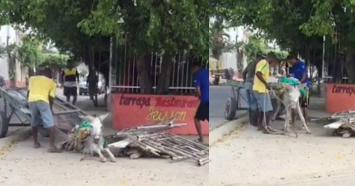 The mayor of Cartagena changes mules for motor coaches