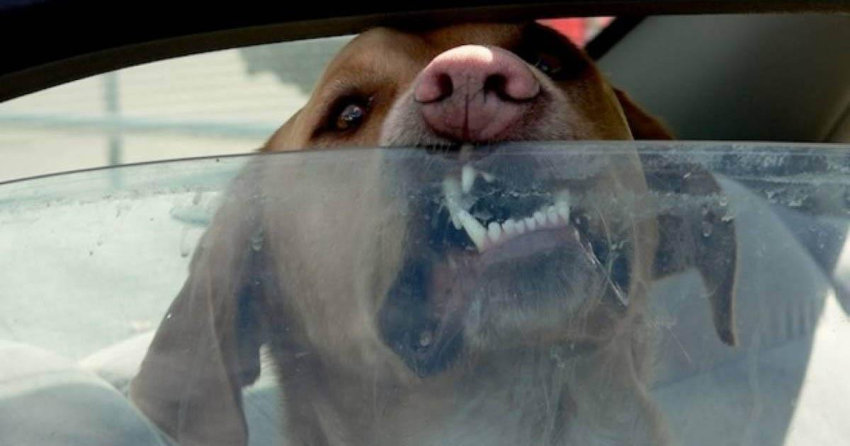 Apply the Cholito Law with the owner of this dog who died locked in his vehicle