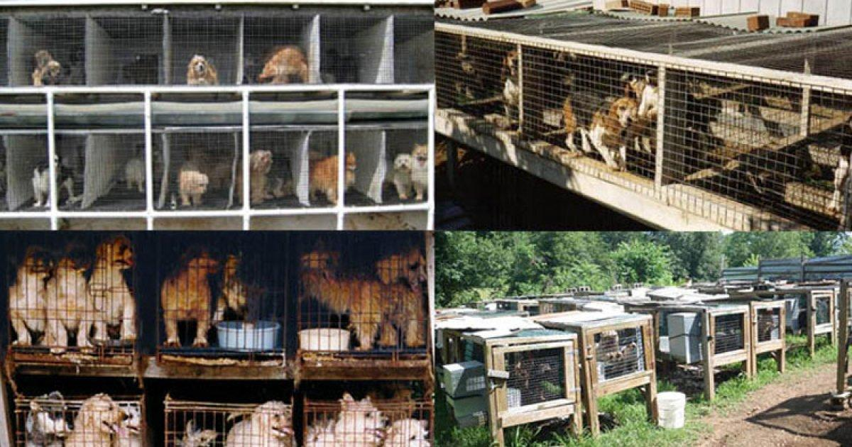 Close puppy mills throughout Spain