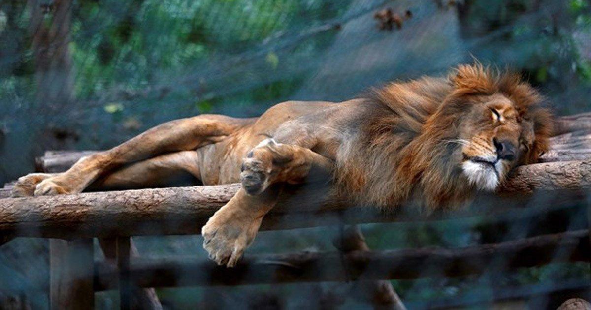 Salvare gli animali dello zoo del Venezuela che stanno per morire.