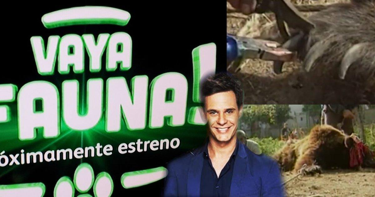 Directors of Telecinco end the TV Show Vaya Fauna