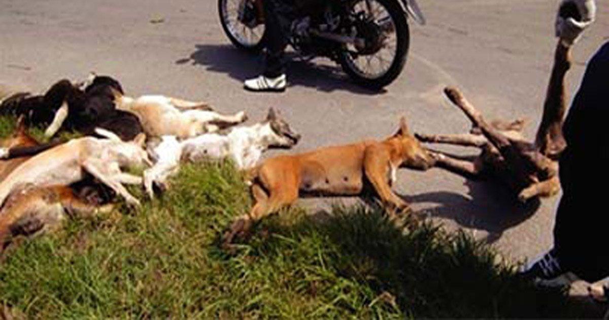 Stop à l'abattage des chiens et chats errants Algérie