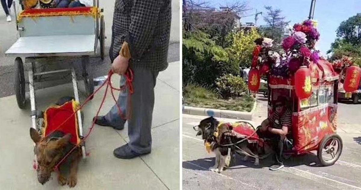 Prohibit carts pulled by dogs in China