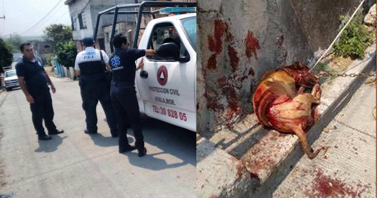 Quiero justicia para este perrito asesinado, que los culpables vayan presos!