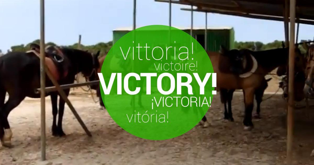 Salvemos a los caballos del maltrato