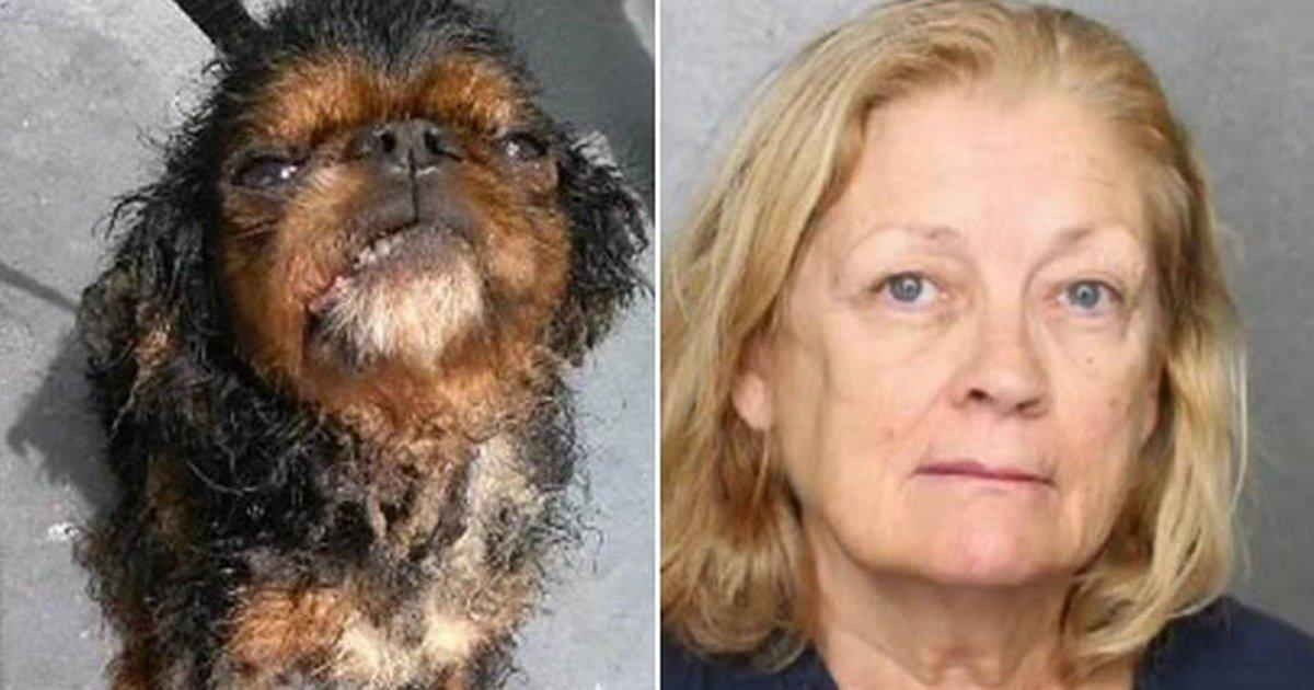 Pet store owner jailed and shop closed!