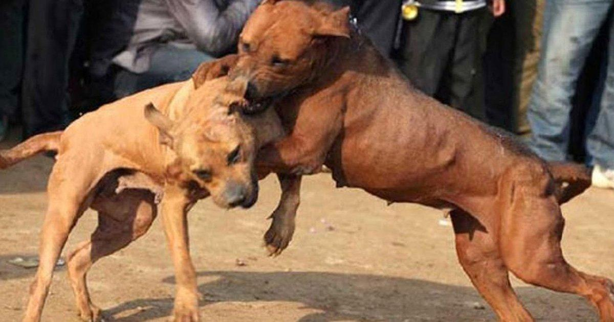 The Senate bans dog fights in Mexico!