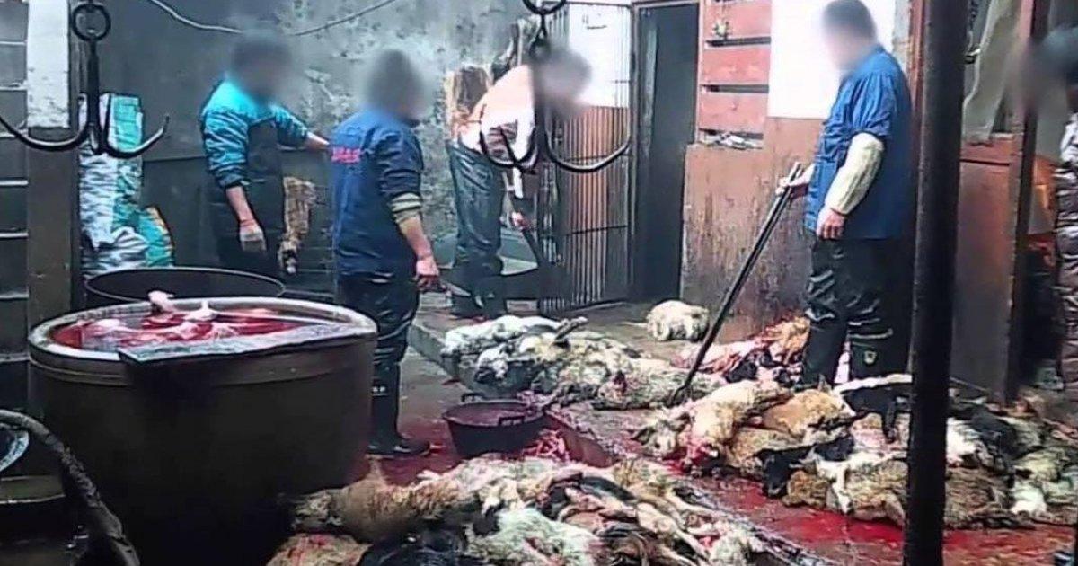 Detengamos la Locura de la Industria del Cuero de Perros!