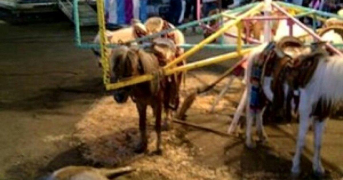 The Feria de Abril will no longer count on ponys attractions