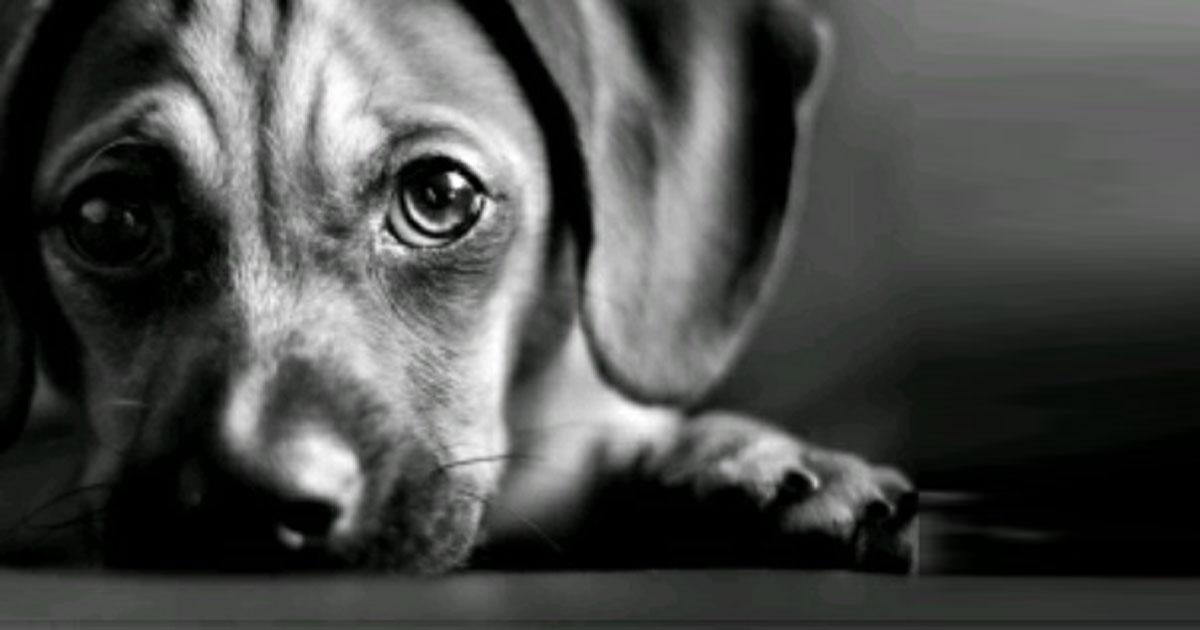 We want to increase the sentence for animal abuse in Spain!