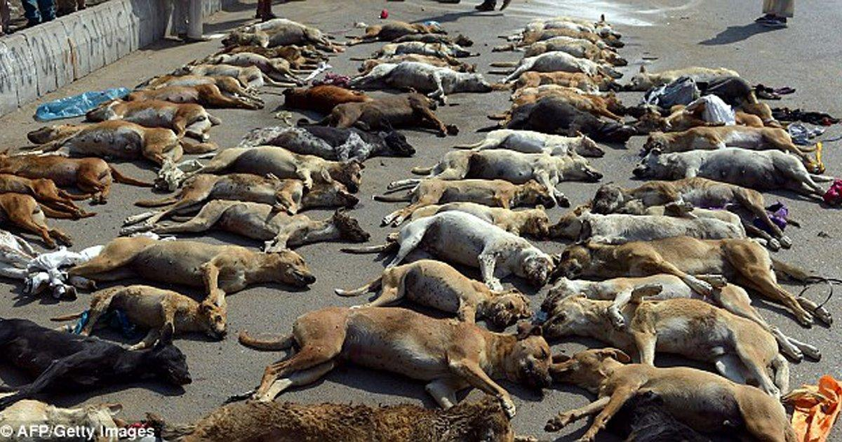 Salven a los perros de las calles!  Para eliminarlos los atan a postes, los dejan morir de hambre, deshidratación y frío