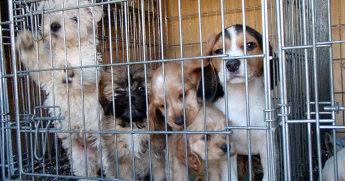 Ban the sale of pets in MercadoLibre, Alamaula and OLX