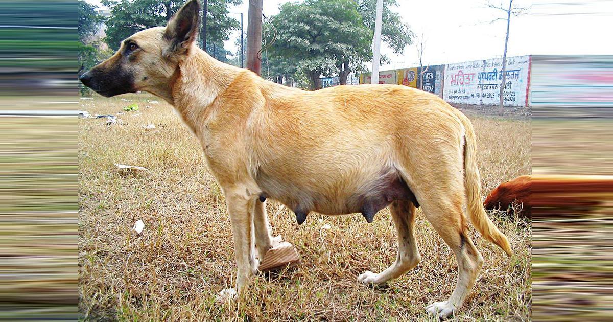Free castration of stray animals