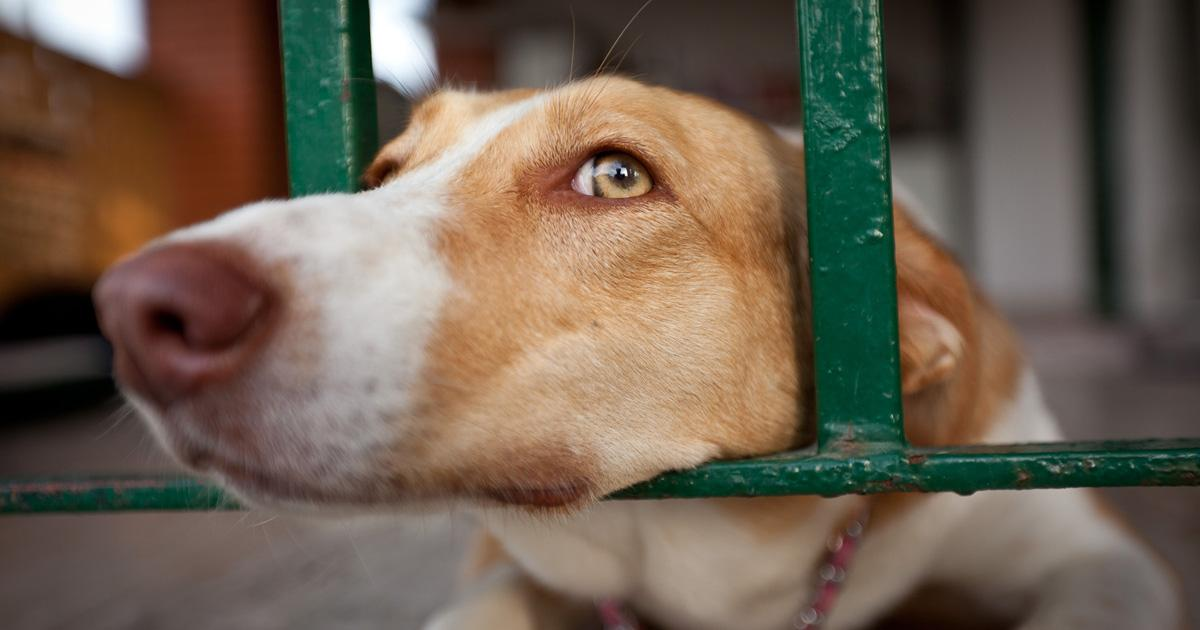 Stop the sacrifice of dogs in Son Reus!