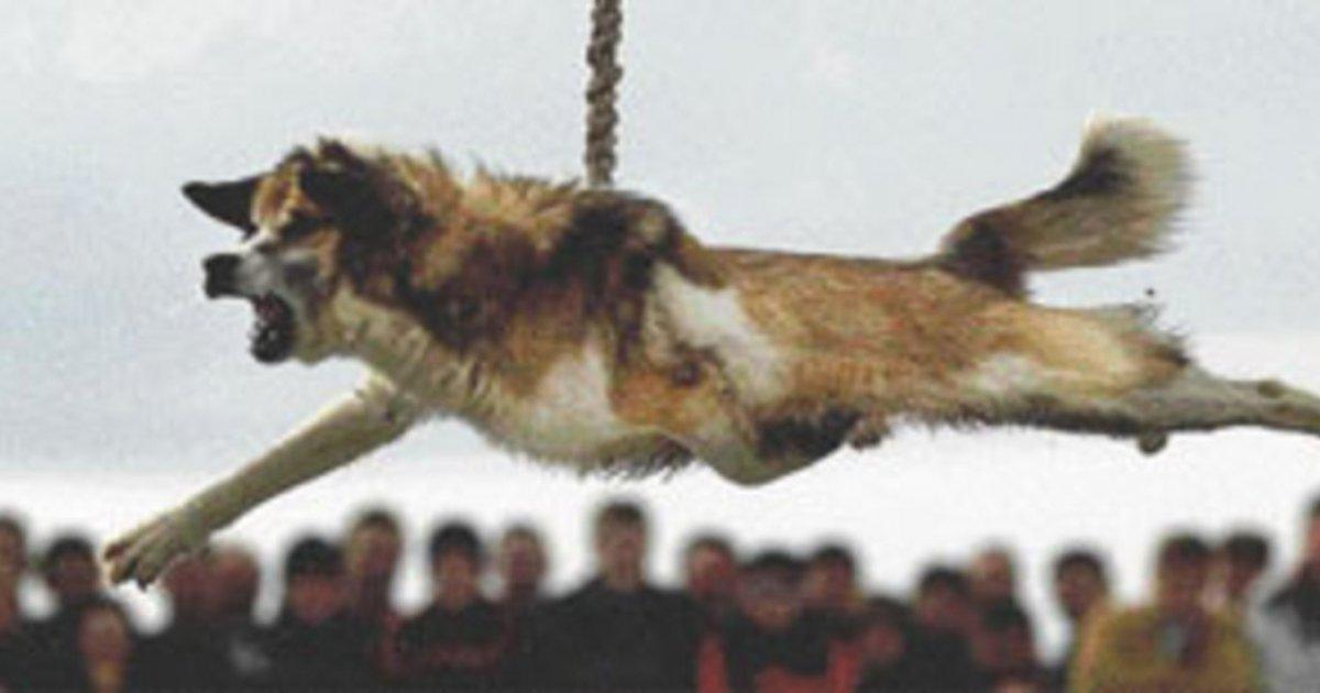 STOP the Dog Spinning in Bulgaria!