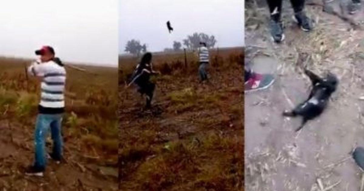 Mataron a un cachorro a golpes y se filmaron, queremos JUSTICIA!