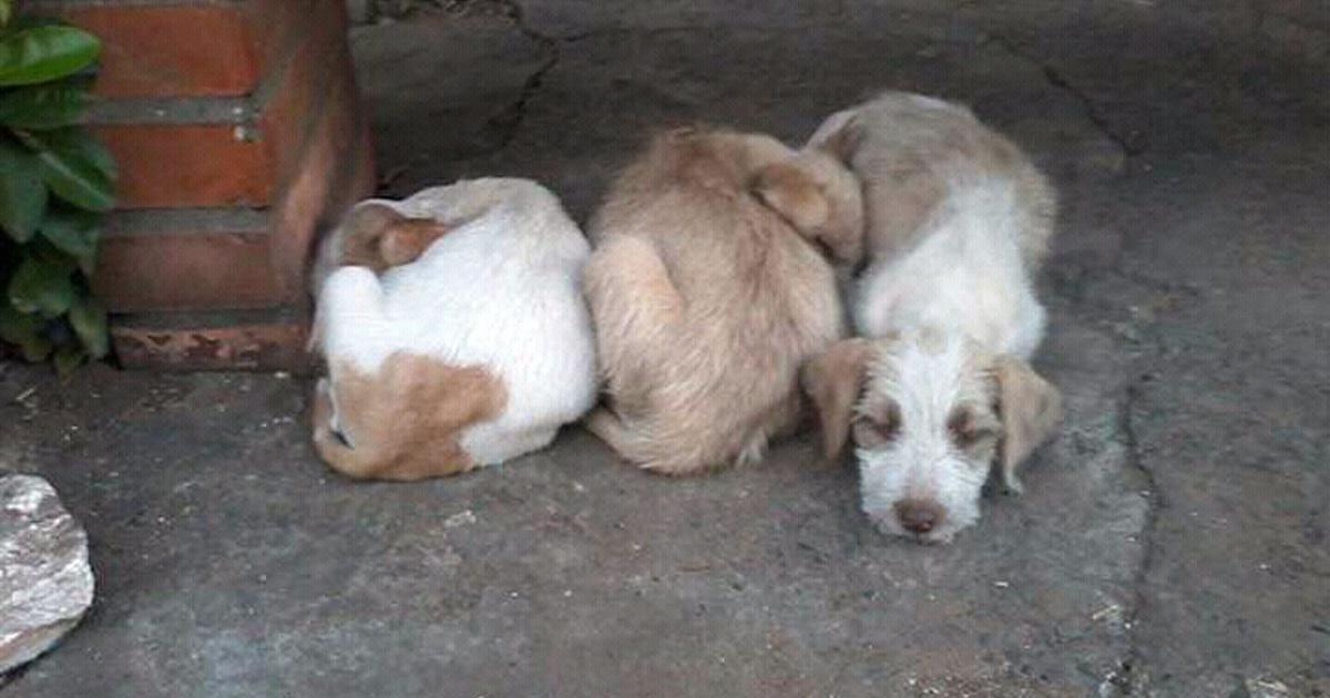 Create a home for abandoned dogs, not a jail where to lock them