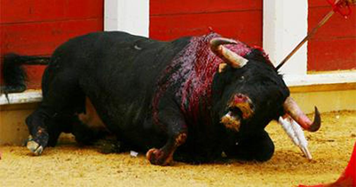 Boycott the tourism of Brazilians to Spain while there are bullfights