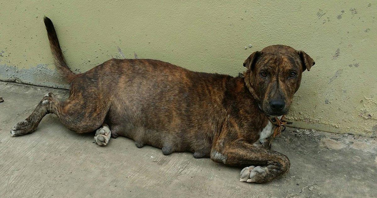 Resultado de imagen para esterilizar perros