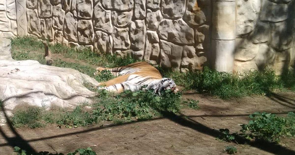 Denunciamos la situación caótica en la que se encuentran varios animales del zoo Prudencio Navarro de Ayamonte (Huelva)