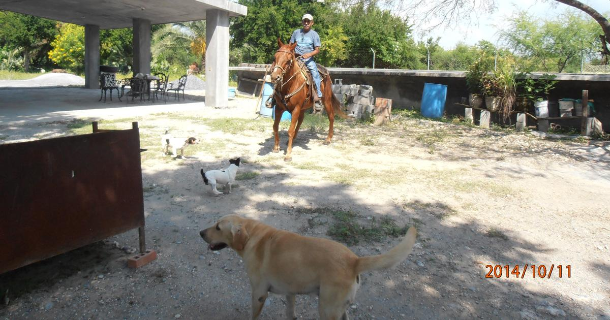 Free castration for pets and stray animals in Mexico