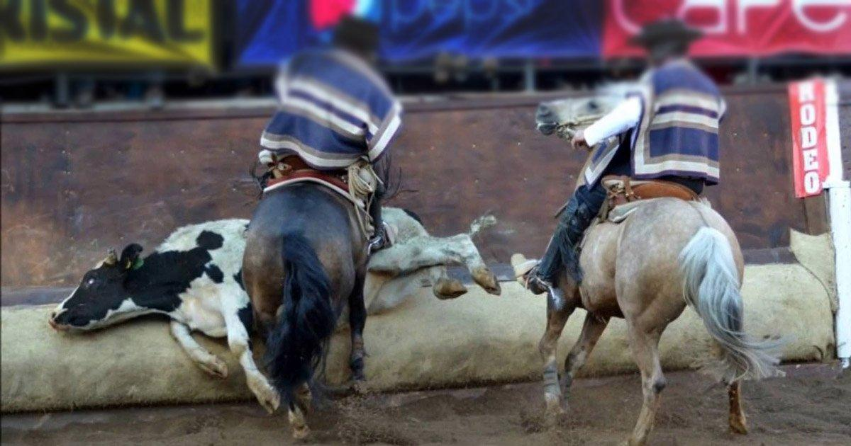 the misunderstanding of the sport of rodeo as an animal abuse Rodeos represent blatant animal abuse and exploitation all in the name of 'entertainment' animals used in rodeos are forced to buck a rodeo is a form of entertainment or sport where untrained horses and cattle are used to demonstrate riding and handling skills.