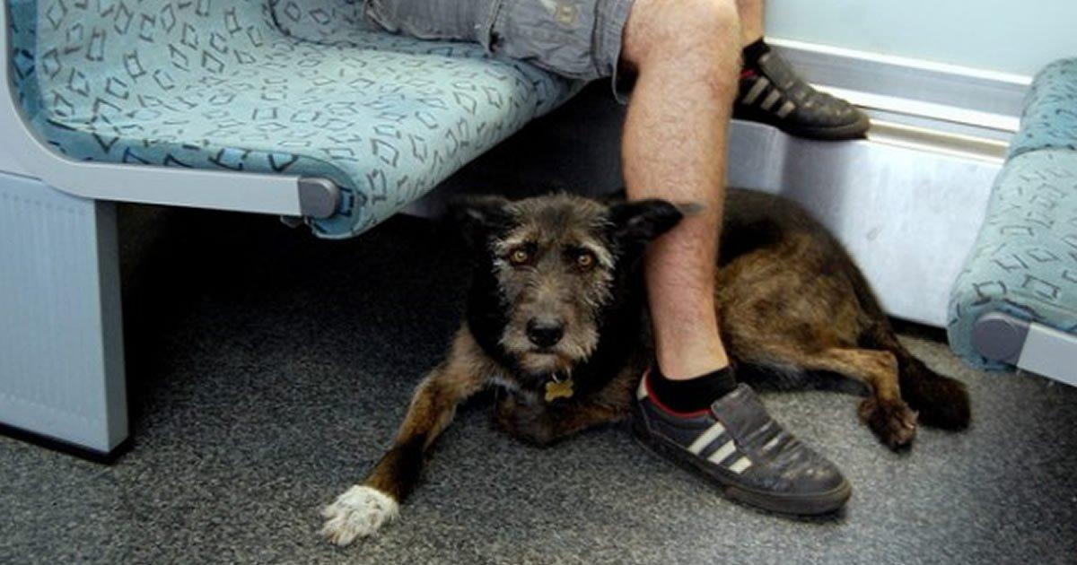 Dogs will be able to travel in the Madrid Metro, we did it!