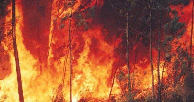 Exigimos el Cumplimiento de la Ley de Bosques FIRMA AHORA!