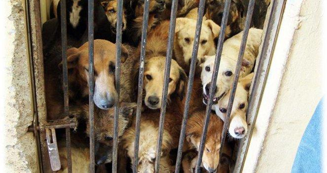 The dogs must receive decent treatment at the municipal kennels
