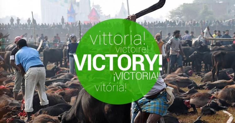 Finally Nepal chooses to end the world´s largest animal sacrifice festival
