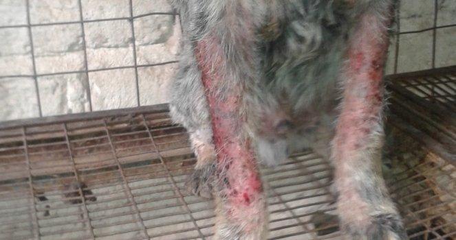 Que el Ministerio Público de Lagos de Moreno, Jalisco, atienda las peticiones sobre el maltrato animal