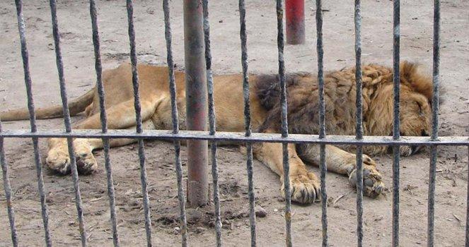 Liberen a los animales del Zoológico