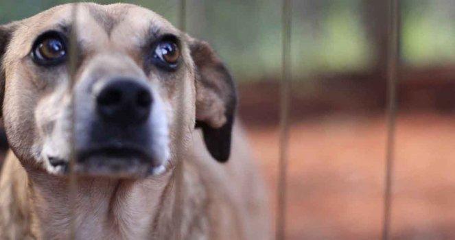 Aumento de pena de 4 para 8 anos de cadeia é necessário para terminar com a covardia contra os animais