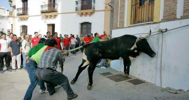 "Eliminar esta ""Fiesta"" en Ohanes, Almería"