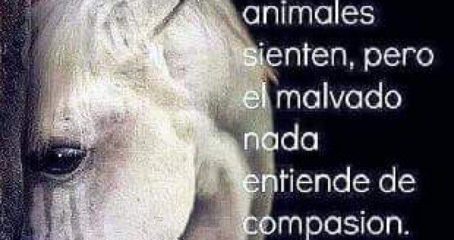 Que se prohíba la venta de animales en el Mercado de San Bernabé
