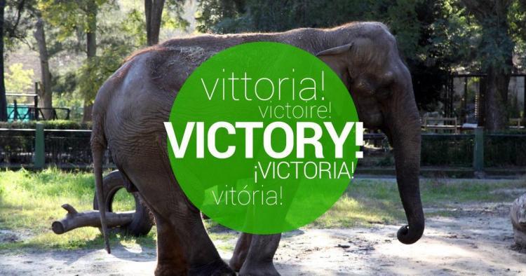 Treat now Pelusa, the elephant of the Zoo of La Plata