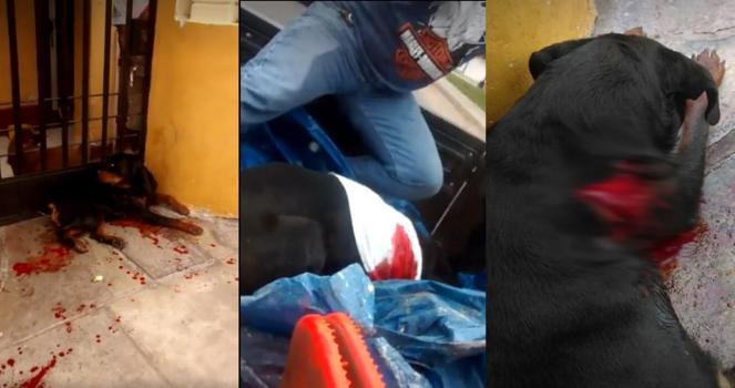 Invia alla prigione la persona che quasi uccide questo cane!